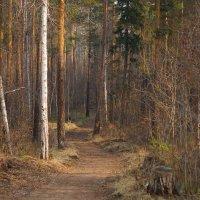 Тропинка в лес густой. :: Валентина Налетова