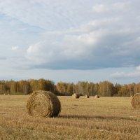 Осень золотая :: Надежда