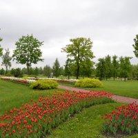 Тюльпаны :: Владимир Болдырев