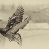 крылья :: Владимир Любавин