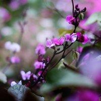 Садовые цветы :: Оксана Сергеева