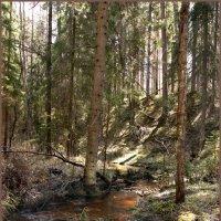 Ручей в лесу :: Наталья