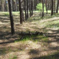 Утренние тени в лесу :: Галина