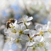 Весна :: Александр Довгий
