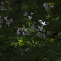 Под сенью леса. :: Svetlana