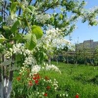 Весна в монастыре... :: Тамара (st.tamara)