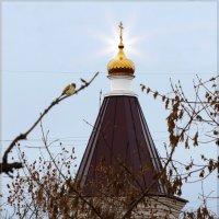 Воробей и церковь. :: Anatol Livtsov