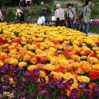 Крым.Никитский ботанический сад. Бал тюльпанов :: татьяна