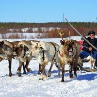 Праздник Севера, с.Ловозеро Мурманской области :: Tatyana Nemchinova