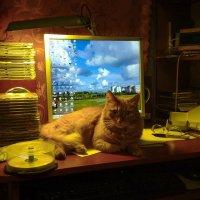 Кошка-компаньон. :: Владимир Безбородов