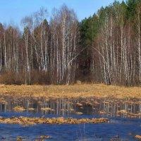 Запахли тиной мшарные болота... :: Лесо-Вед (Баранов)