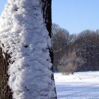 солнце снег красота! :: Анна Воробьева