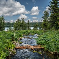 Буйство зелени :: Андрей Поляков