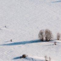 зима еще не ушла :: Timofey Chichikov