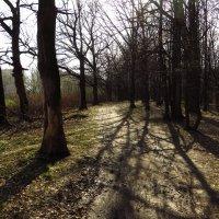 Самый прозрачный лес - в апреле :: Андрей Лукьянов