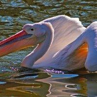 Выкрутасы на воде :: Alexander Andronik