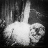 Мартовская грусть. :: Вера Катан