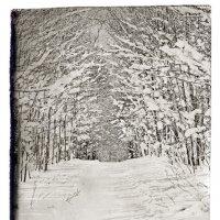 Зимняя Дорожка :: Alexander Dementev
