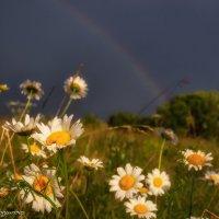 После дождя :: Наталия Горюнова