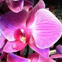 Праздничный цветок ! :: Марина Харченкова