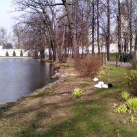 Послеобеденный сон на пруду Николо-Угрешского Монастыря. :: Ольга Кривых