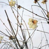 Зимние ягоды :: Marina Bernackaya Бернацкая