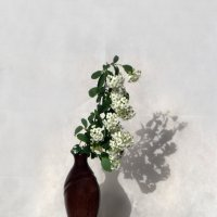 Цветы апреля :: Наталья Джикидзе (Берёзина)