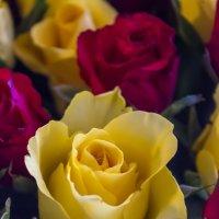 Розы :: Sergey Lebedev