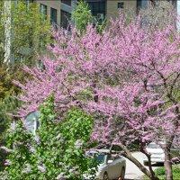 Цветущий май! :: Надежда