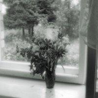 На окне :: Ирина Курмалеева