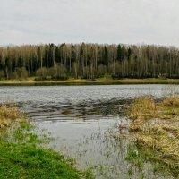 В ненастный майский день на рыбацком озере. :: Милешкин Владимир Алексеевич