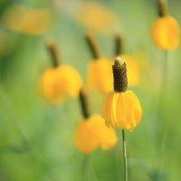 цветы :: Naum
