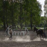 Обучение конкуру. :: Svetlana
