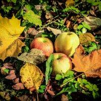 Осень :: Алена Панкрашова