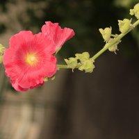 Цвет во дворе :: Дария Крылова