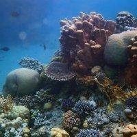 Яркие краски Красного моря :: Boris Khershberg