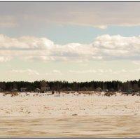 Вид на пос. Легашевская. Река Онега. :: Марина Никулина