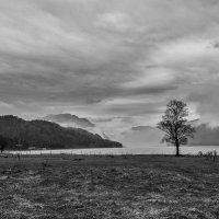 a single tree :: cfysx