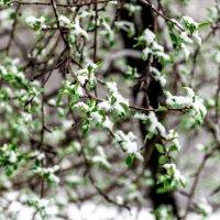 Весна в Сибире :: Юрий Борзов