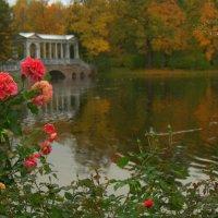 Осенняя красота... :: Наталья