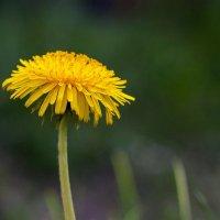 Банально цветочек :: shabof