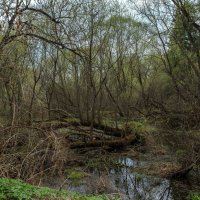 Весеннее болото :: Светлана Матонкина