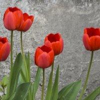 Цветы у дома. :: юрий Амосов