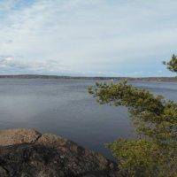 Балтийский залив в парке Монрепо :: Татьяна