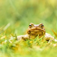 Портрет в траве :: Павел Кочетов