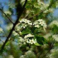 Весенне кружево... :: владимир