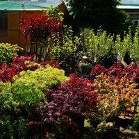 краски майского сада :: Александр Корчемный