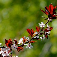 цветение садов 1 :: Александр Прокудин