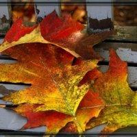 Про осень :: Натали Пам