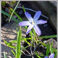 Весны гонец :: muh5257